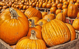 Autumn / Halloween 8. Halloween display of  pumpkins in wooden crates and on stands Stock Photography