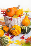 Autumn halloween decorative pumpkins in basket Stock Image