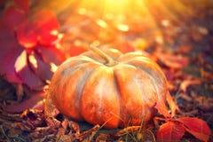 Autumn Halloween-pompoen Oranje pompoen over aardachtergrond royalty-vrije stock foto's