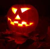Autumn halloween pumpkin Stock Images