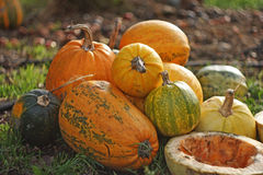 Autumn halloween pumpkins on blurry background. Autumn harvest of pumpkins halloween. Assorted pumpkins outdoor. Autumn halloween pumpkins on blurry background Stock Images