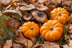 Autumn halloween pumpkins and mushrooms. In fallen leafs Royalty Free Stock Photos