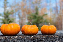 Autumn halloween pumpkins. On the road Royalty Free Stock Photo