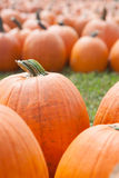 Autumn: Halloween Pumpkins Stock Photo