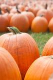 Autumn: Halloween Pumpkins Stock Photo