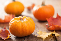 Autumn halloween pumpkins on wooden background Royalty Free Stock Photography