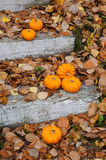 Autumn halloween pumpkins. On the wooden steps in fallen leafs Royalty Free Stock Photography