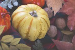 Autumn halloween or thanksgiving backgrouund. Yellow and orrange pumpkins and colorful leaves old barn wood plank stock photos