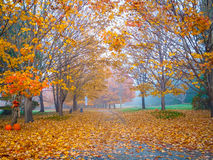 Autumn Halloween Trail Fotografering för Bildbyråer