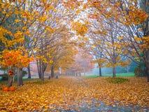 Autumn Halloween Trail Stock Image