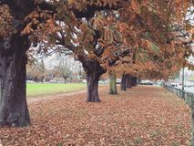 Autumn Hampton Court Green frondoso Fotos de archivo