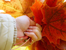Autumn in the hand. Autumn in the girl hand stock images