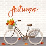 Autumn hand drawn lettering. Retro bicycle with basket of leaves. Healthy lifestyle, fitness Royalty Free Stock Image