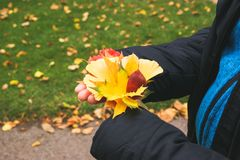 The autumn hands in matte royalty free stock image