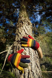Autumn Hands on a Tree Trunk Royalty Free Stock Images