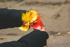 The autumn hands of a woman royalty free stock image
