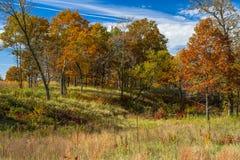 Autumn hardwood forest, bunker park Stock Images