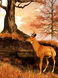Autumn Hart. At the edge of a grassy forest clearing, a twisted, dead oak rests upon a small hill. In the golden light of a cloudy autumn afternoon, a deer has royalty free illustration