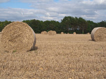 Autumn Harvest. A field of wheat freshly harvested Royalty Free Stock Photography