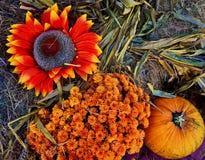 Autumn Harvest Stockbilder