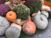 Autumn Harvest photographie stock libre de droits