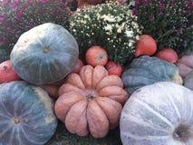 Autumn Harvest fotos de stock royalty free
