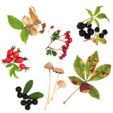 Autumn Harvest. Collection of wild hedgerow produce of fruit, nuts and berries with leaves, isolated over white background Royalty Free Stock Photo