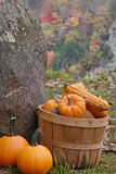 Autumn Harvest. Basket of gourds, beside large boulder, with autumn trees in background Royalty Free Stock Photography