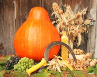 Autumn harvest Stock Photos