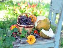 Autumn harvest Stock Photo