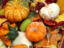 Autumn harvest Stock Photography