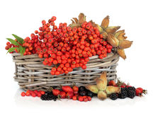 Autumn Harvest Royalty Free Stock Photo