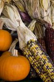 Autumn Harvest. Pumpkins and corn Royalty Free Stock Image