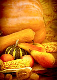 Autumn Harvest Arkivfoto