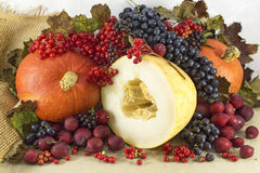 Autumn Harvest Fotos de archivo libres de regalías