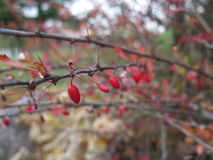 Autumn Harvest Royaltyfri Foto