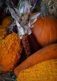 Autumn Harvest Royaltyfri Fotografi