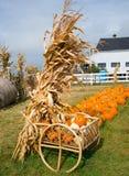 Autumn Harvest Royaltyfria Foton
