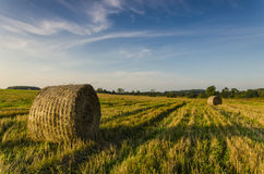 Autumn Harvest Stockfoto