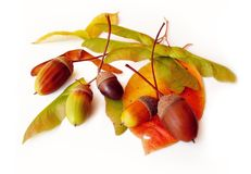 Autumn harvest. Autumn leaves and acorns isolated on white Royalty Free Stock Photography