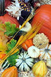 Autumn Harvest. Of pumpkins, Squash and gourds Royalty Free Stock Images