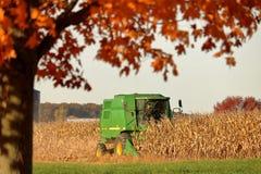 Autumn Harvest Imagens de Stock Royalty Free