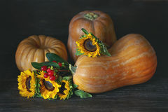 Autumn Harvest Royalty-vrije Stock Foto's