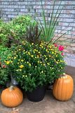 Autumn Harvest Royaltyfria Bilder