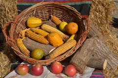 Autumn Harvest Foto de archivo libre de regalías