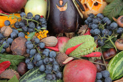 Autumn Harvest Immagine Stock
