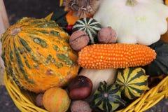 Autumn Harvest Immagini Stock Libere da Diritti