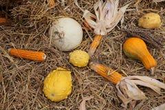 Autumn Harvest Immagine Stock