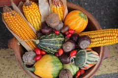 Autumn Harvest Fotografia Stock Libera da Diritti