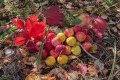 Autumn Harvest Foto de Stock